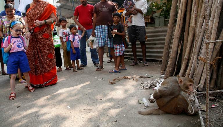 El mono fue capturado y atado