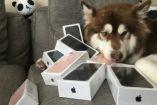 'Coco', el perro millonario con sus ocho iPhone 7