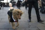 Perro disfrazado como Trump cargando un muñeco con la cara de Putin