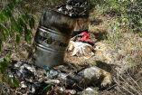 Imagen del basurero donde encontraron a los perros quemados