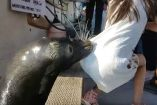 Momento exacto en el que la foca salta y arrastra a la niña al agua