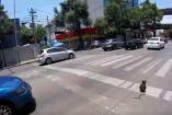 Perrito corre por una avenida de la Ciudad de México