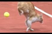 Embedded thumbnail for Gato invade cancha de tenis y recibe pelotazo