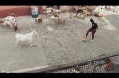 Embedded thumbnail for Comercial de Nike con el que llama a no temerle a la cabra