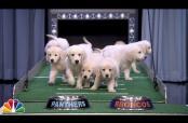 Embedded thumbnail for Cachorros predicen ganador del SB comiendo croquetas