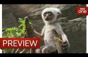 Embedded thumbnail for Monos langur se afligen por muerte de un falso primate