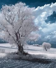 Przemyslaw Kruk suele capturar árboles