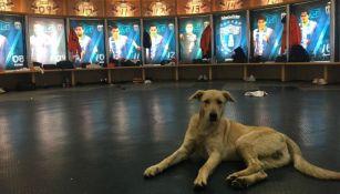 El perro 'posa' en el vestidor del Pachuca