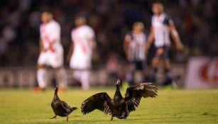 Dos patos visitan a los Rayados de Monterrey