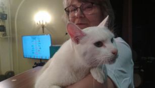Gato Aquiles con su cuidadora