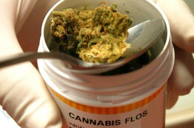 Pequeña porción de mariguana medicinal