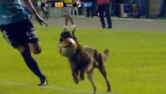 Perro policía se roba el balón en pleno partido