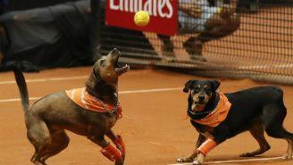 Perros atrapan pelota en el Abierto de Tenis en Brasil