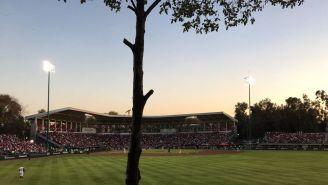 Árbol que bloqueaba la visibilidad en el estadio