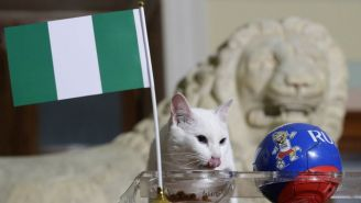 Gato come del tazón que tiene la bandera de Nigeria