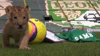 'Sambu' ya pisó la cancha del Nou Camp de León