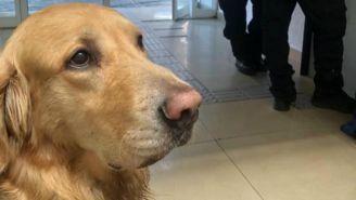 Perro es detenido en Cuauhtémoc
