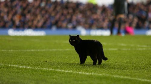 Gato negro visita el Goddison Park durante el encuentro entre Everton y Wolverhampton