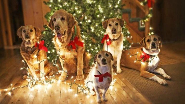 Perros junto a un árbol de Navidad