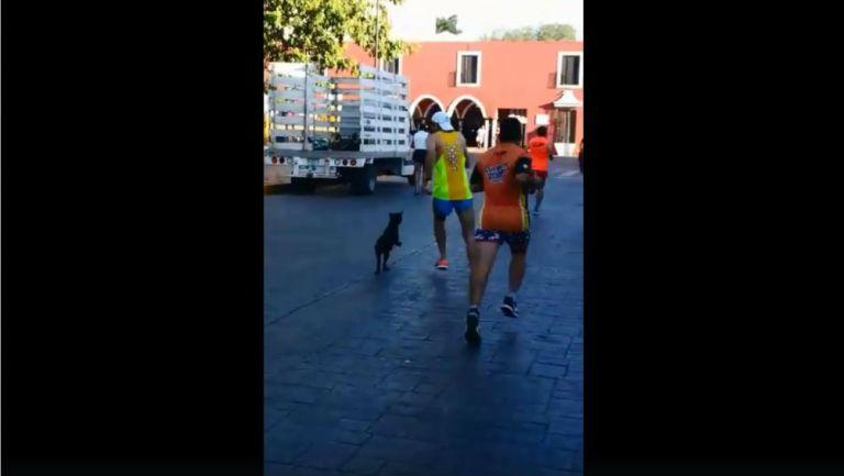 Momento en que el corredor patea al perro