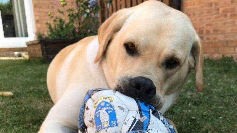 Championship: Barney, el perro aficionado del Sheffield Wednesday