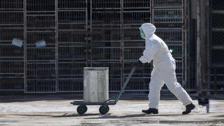 Un trabajador en una instalación agroindustrial de China