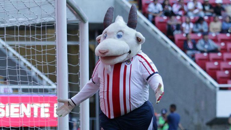 Chivas: Mascota 'Chiva Loca', internada por Covid-19