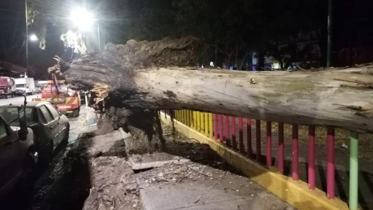 Fuertes vientos derribaron árboles en CDMX