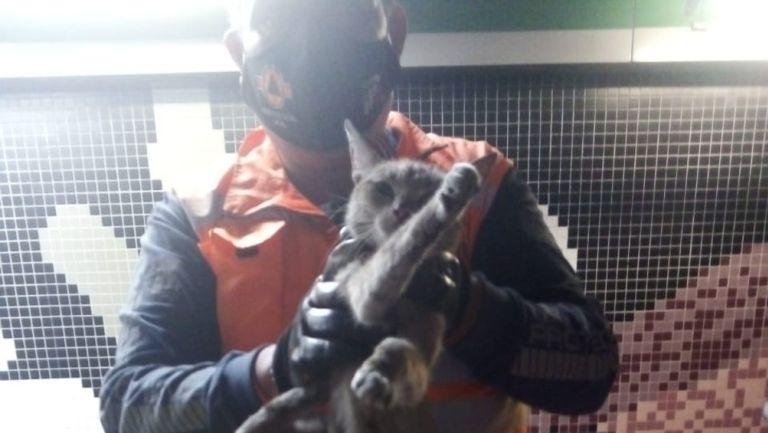 Gato rescatado en la estación Tepito del Metro