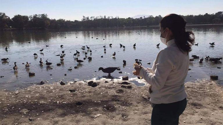 La fauna de los lagos también sufre por el deterioro