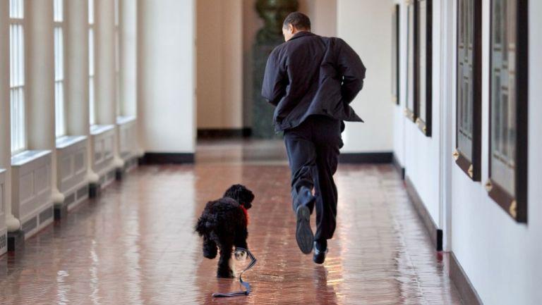 Bo y Obama corriendo por un pasillo