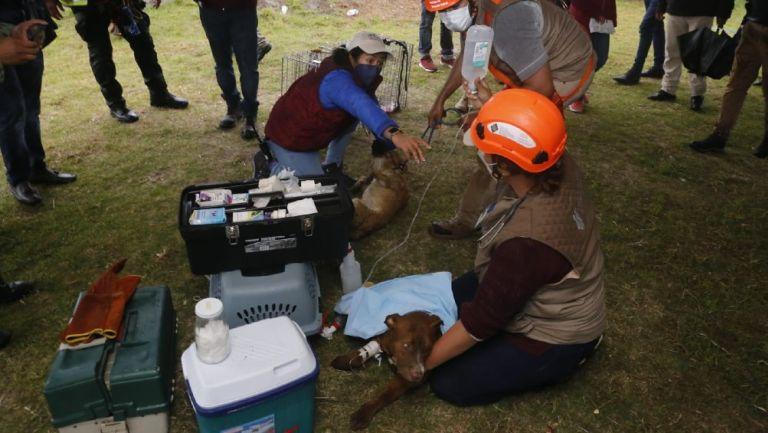 Socavón Puebla: Dos perritos que cayeron en el hoyo fueron salvados
